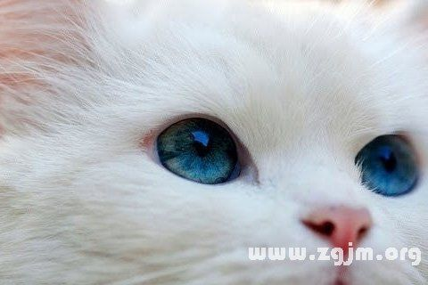 【0706】白貓修改版 2.4.0 自制開關版日服+繁中1.0.76更新版