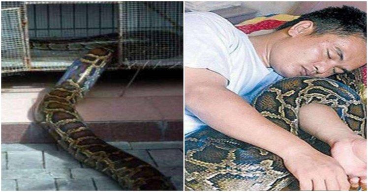 蛇的報恩!一男子在9年前曾經救了一條小蛇..9年後那條蛇竟以這樣的方式報達恩情!